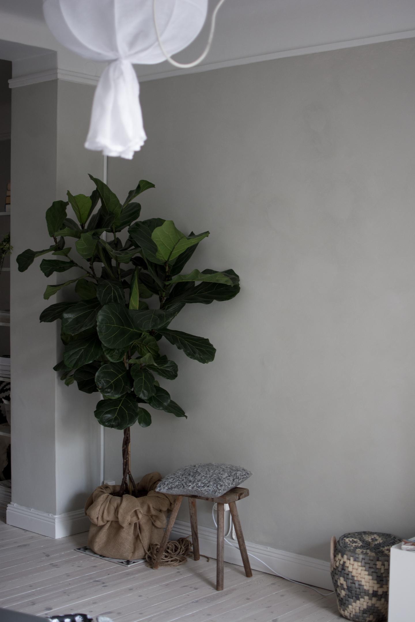Ett träd i vårt vardagsrum   baluns och bryderier